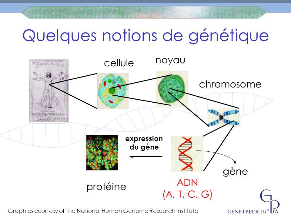 Quelques notions de génétique