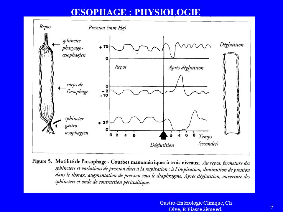 ŒSOPHAGE : PHYSIOLOGIE