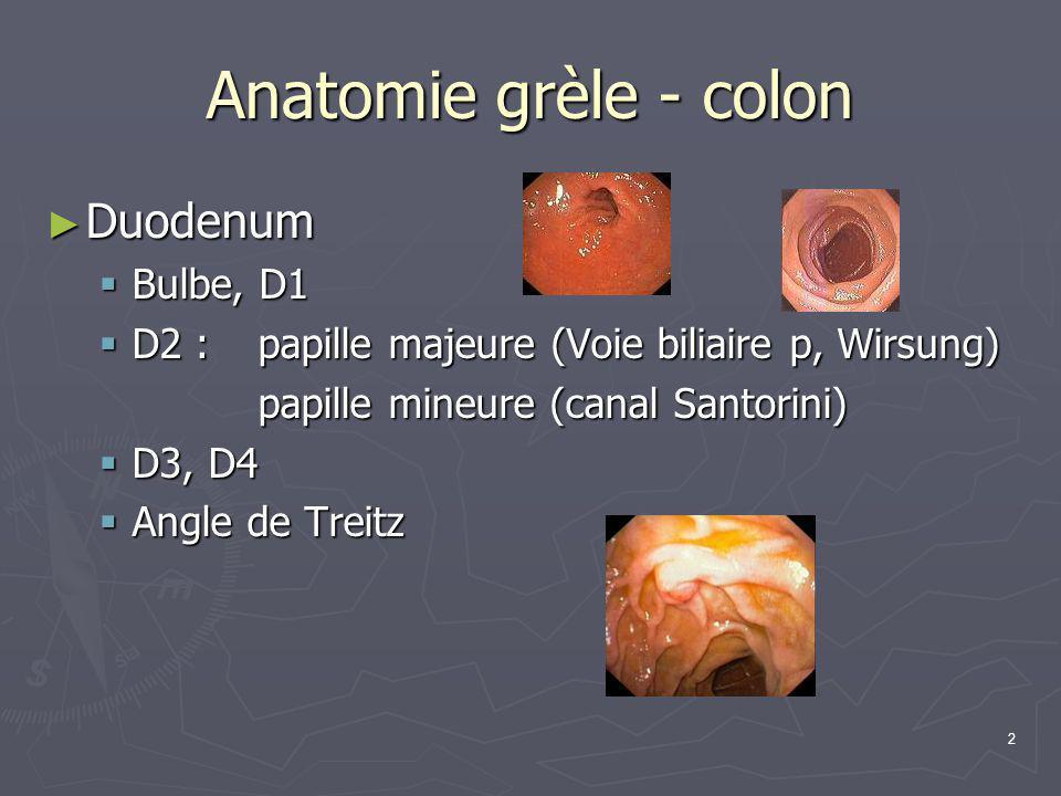 Anatomie grèle - colon Duodenum Bulbe, D1