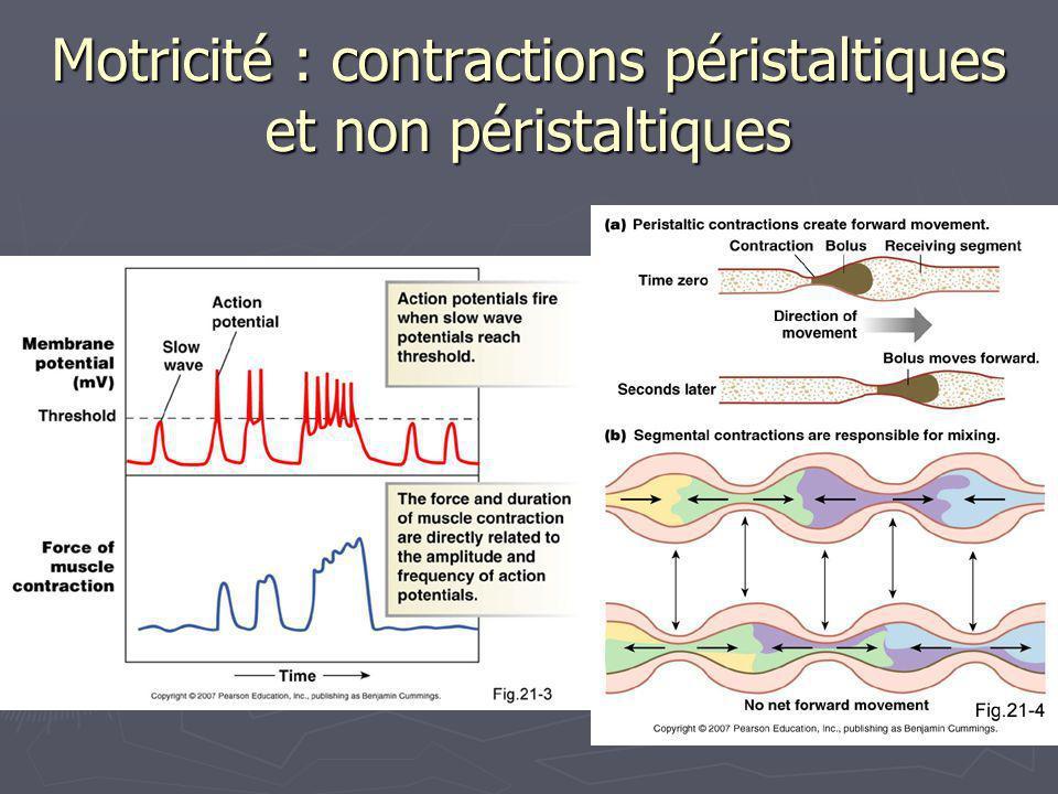 Motricité : contractions péristaltiques et non péristaltiques