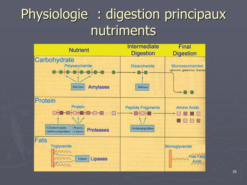 Physiologie : digestion principaux nutriments