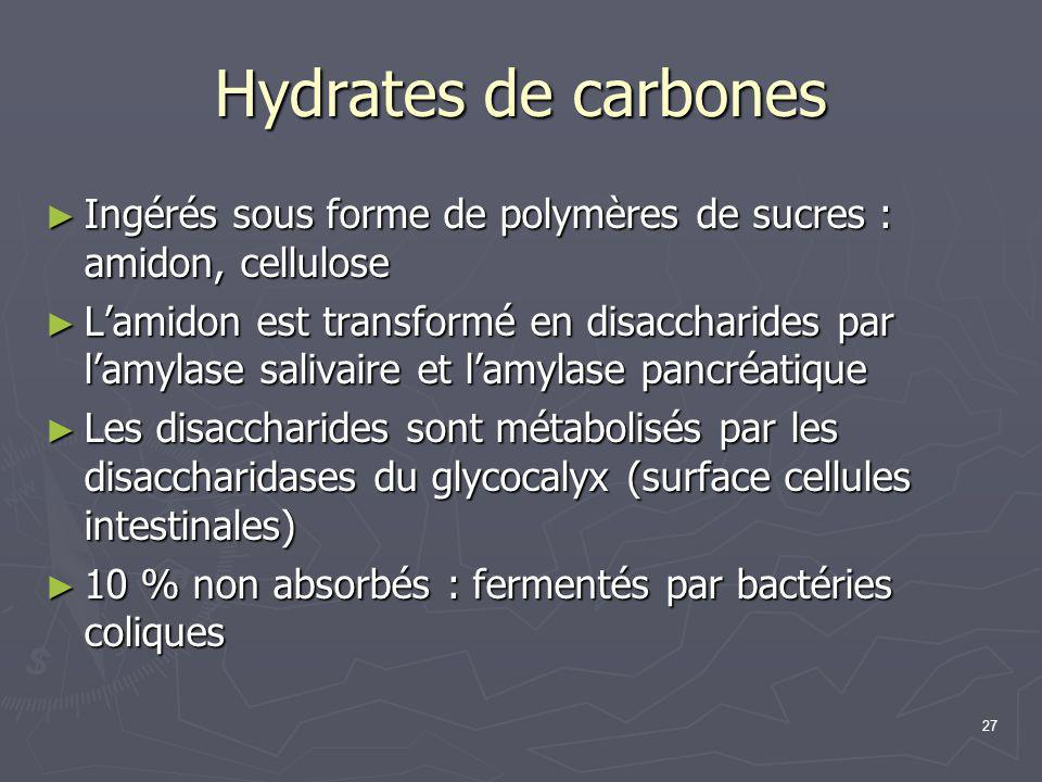 Hydrates de carbones Ingérés sous forme de polymères de sucres : amidon, cellulose.