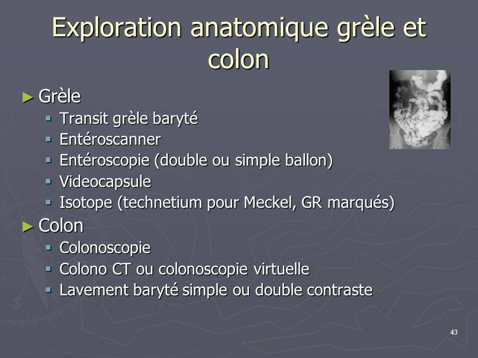 Exploration anatomique grèle et colon