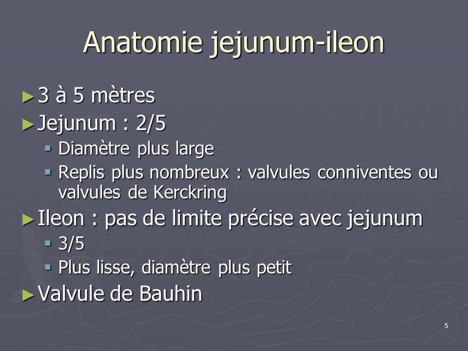 Anatomie jejunum-ileon