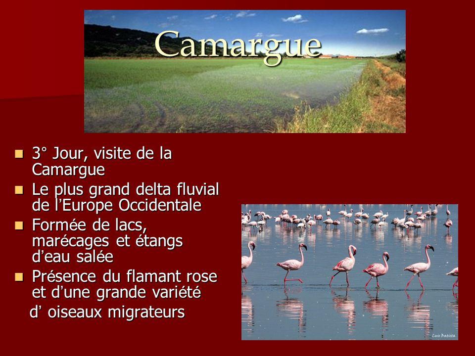 Camargue 3° Jour, visite de la Camargue