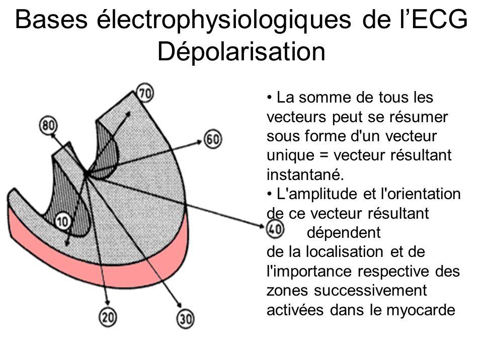 Bases électrophysiologiques de l'ECG Dépolarisation