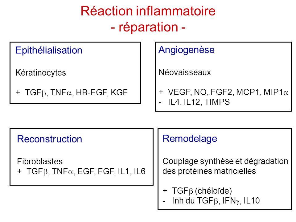 Réaction inflammatoire - réparation -