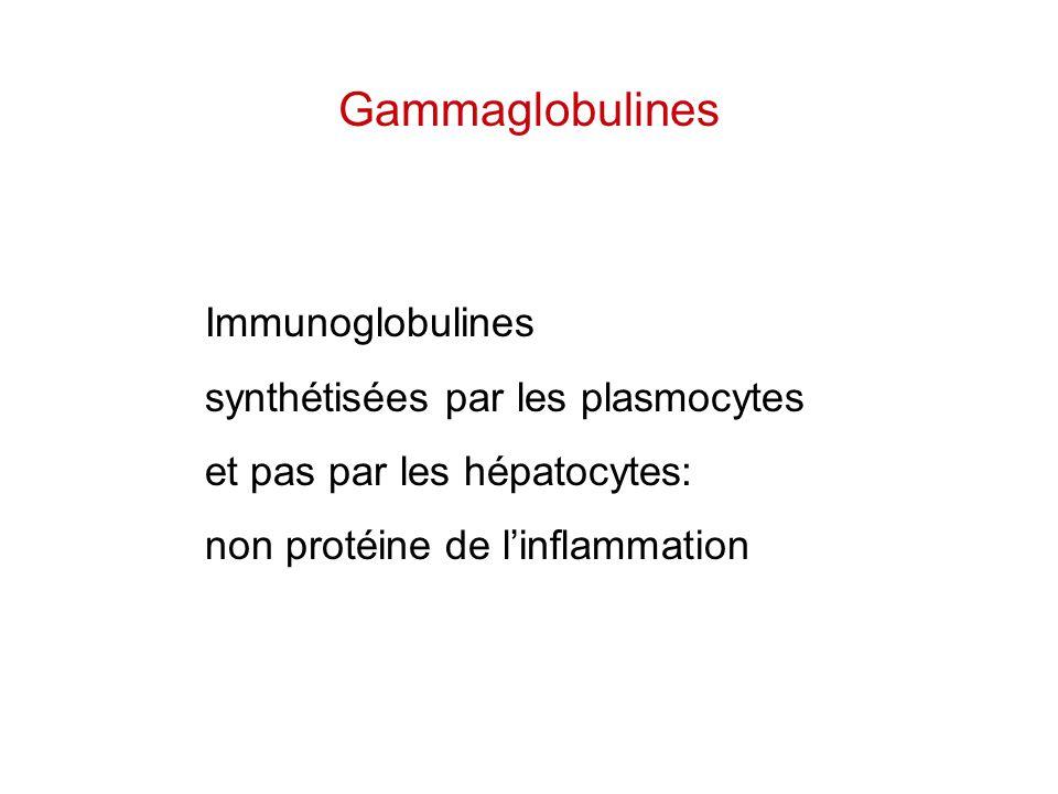 Gammaglobulines Immunoglobulines synthétisées par les plasmocytes