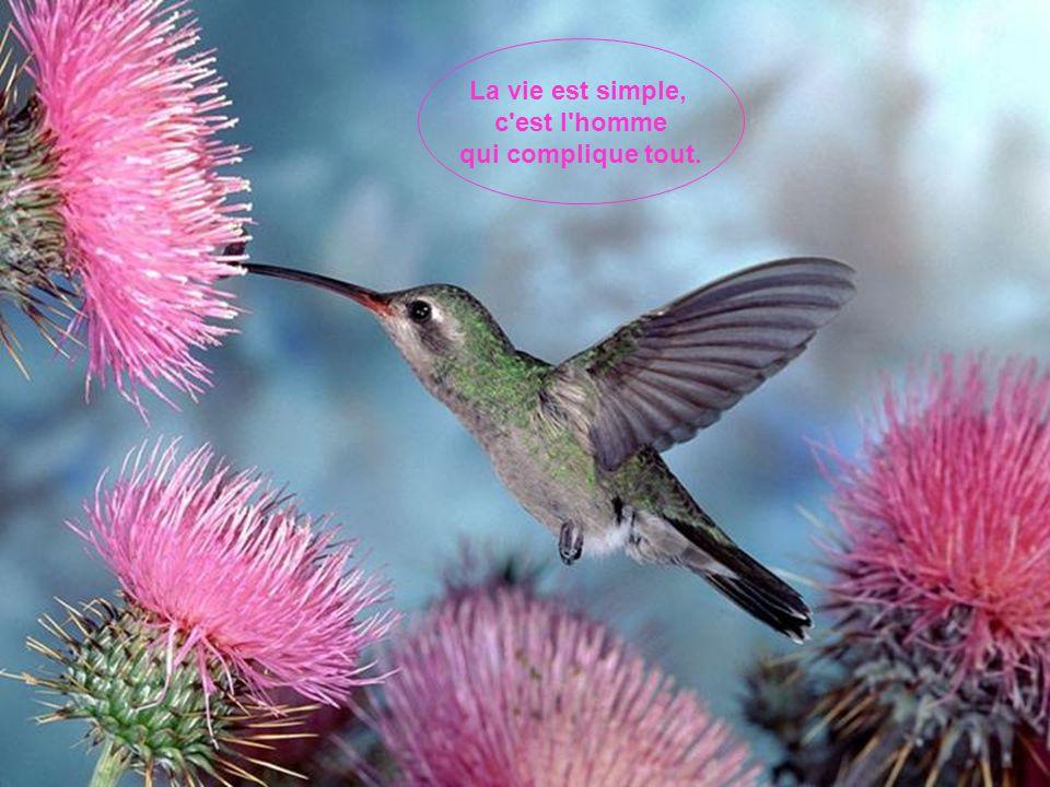 La vie est simple, c est l homme qui complique tout.
