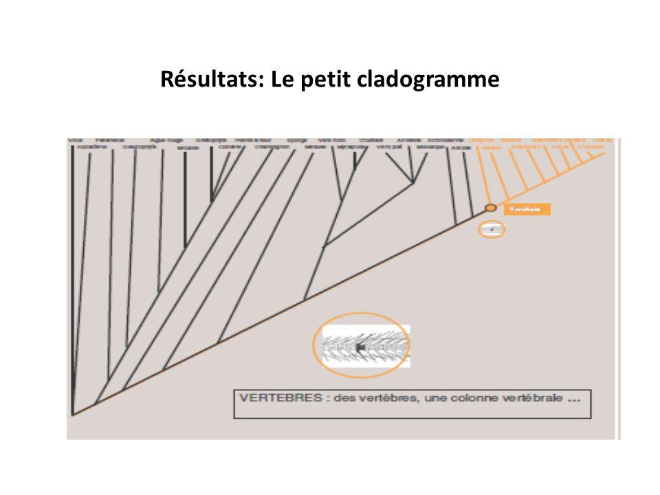 Résultats: Le petit cladogramme