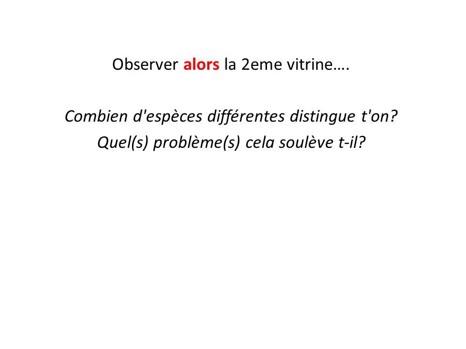 Observer alors la 2eme vitrine….