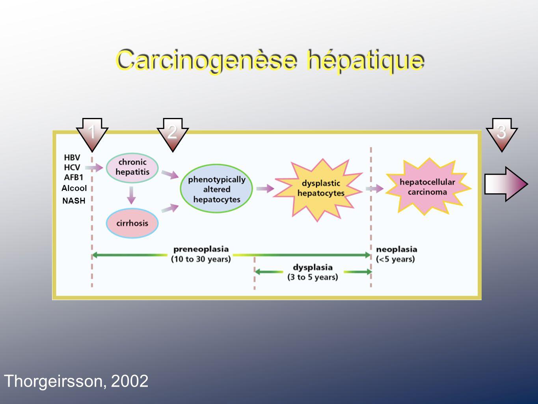 Carcinogenèse hépatique