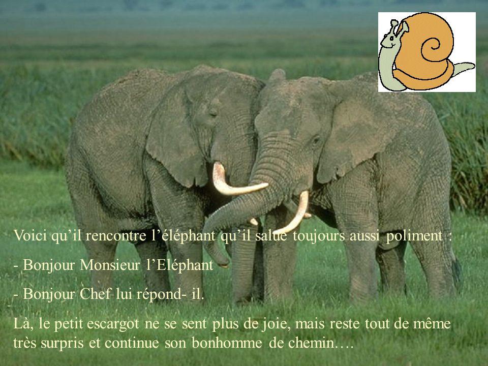 Voici qu'il rencontre l'éléphant qu'il salue toujours aussi poliment :