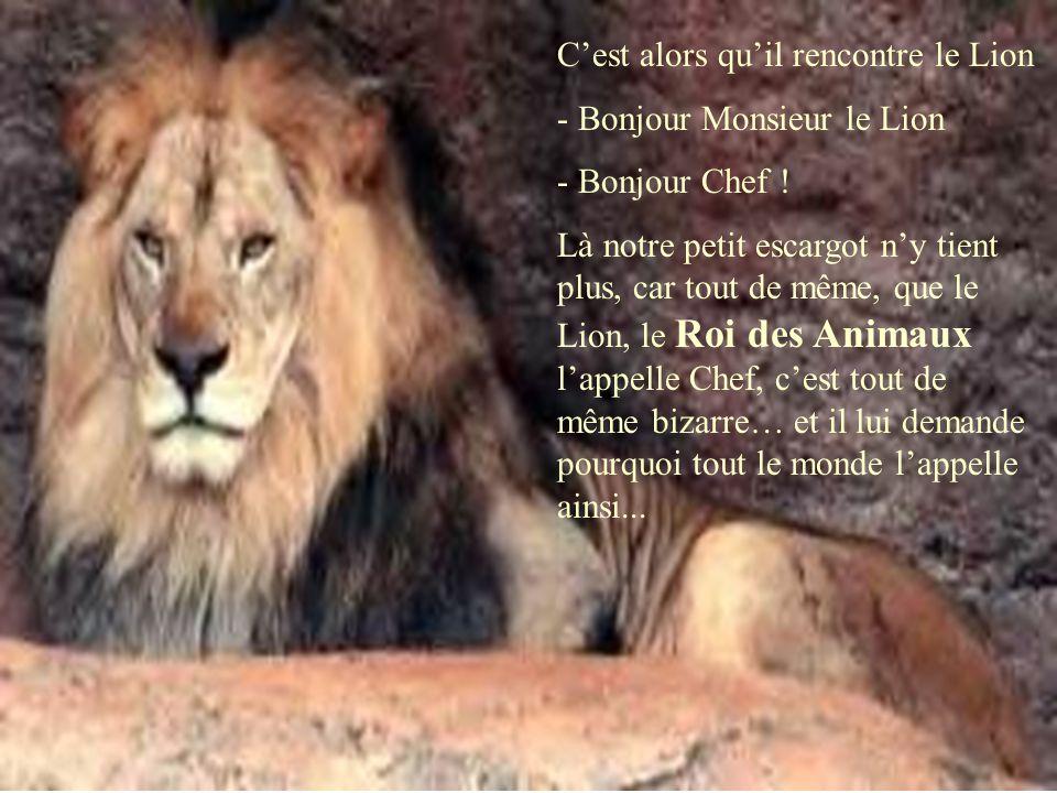 C'est alors qu'il rencontre le Lion