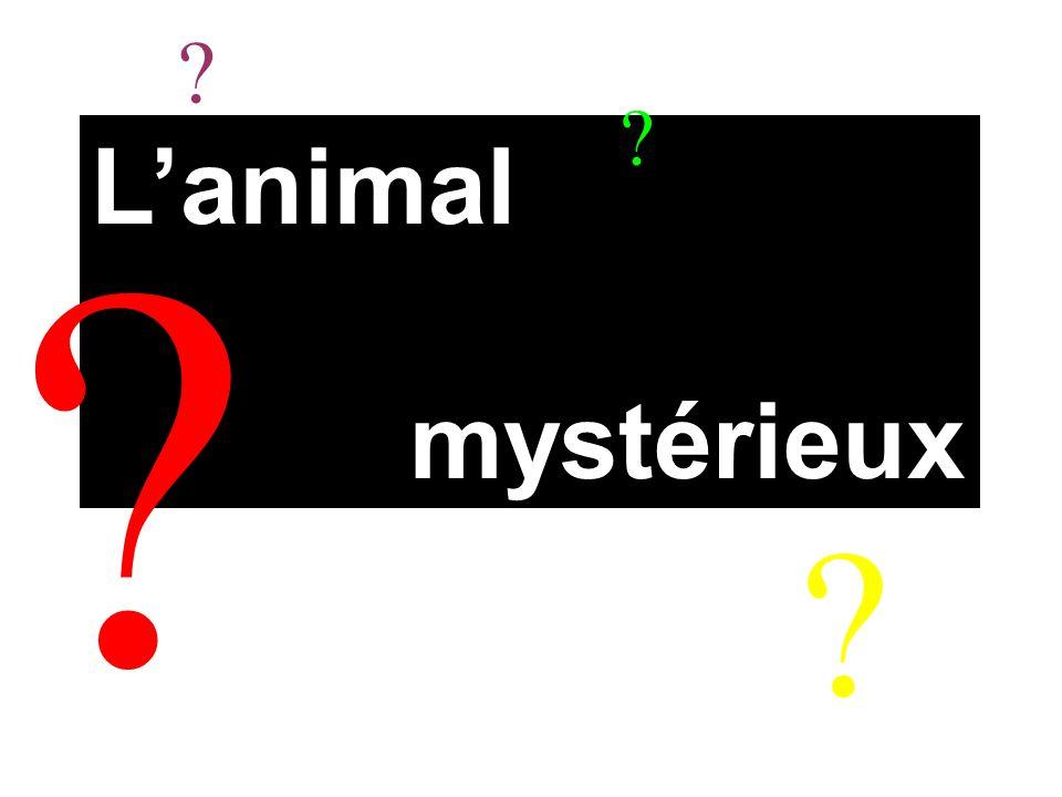 L'animal mystérieux