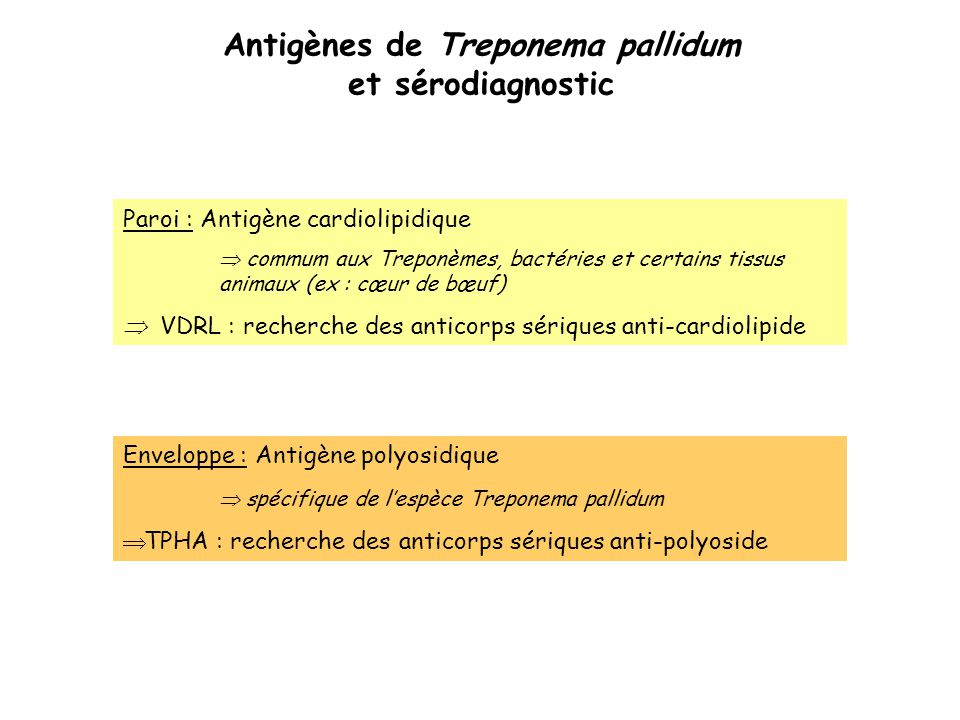 Antigènes de Treponema pallidum et sérodiagnostic