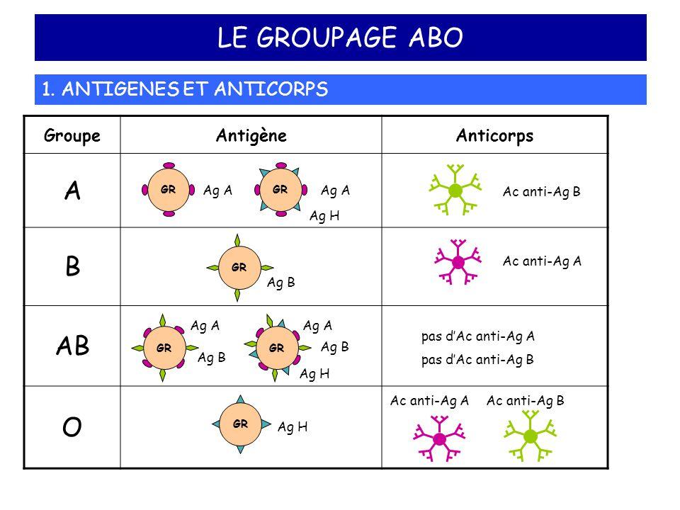 LE GROUPAGE ABO A B AB O 1. ANTIGENES ET ANTICORPS Groupe Antigène