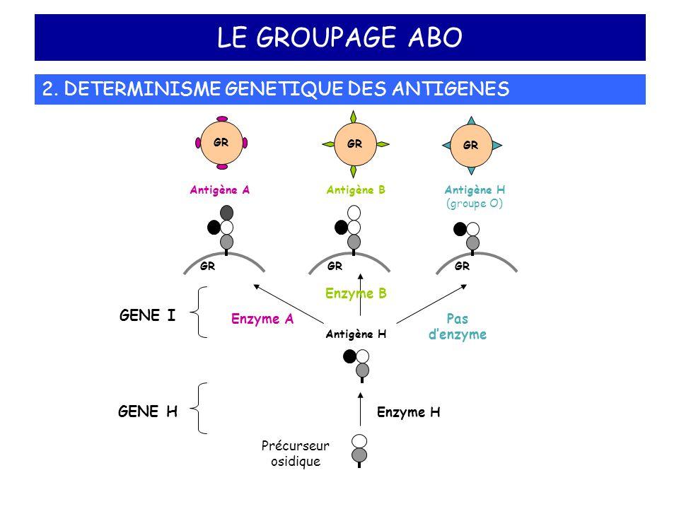 LE GROUPAGE ABO 2. DETERMINISME GENETIQUE DES ANTIGENES GENE I GENE H