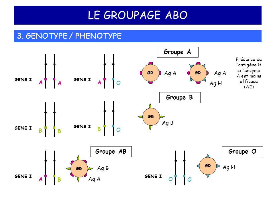 Présence de l'antigène H si l'enzyme A est moins efficace (A2)