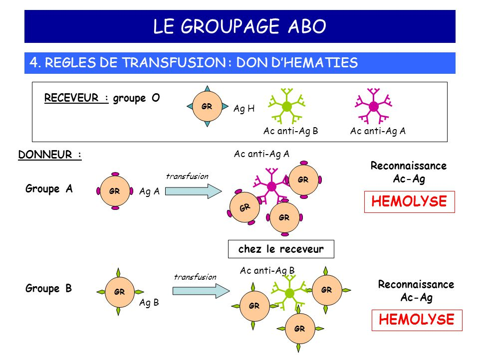 LE GROUPAGE ABO 4. REGLES DE TRANSFUSION : DON D'HEMATIES HEMOLYSE