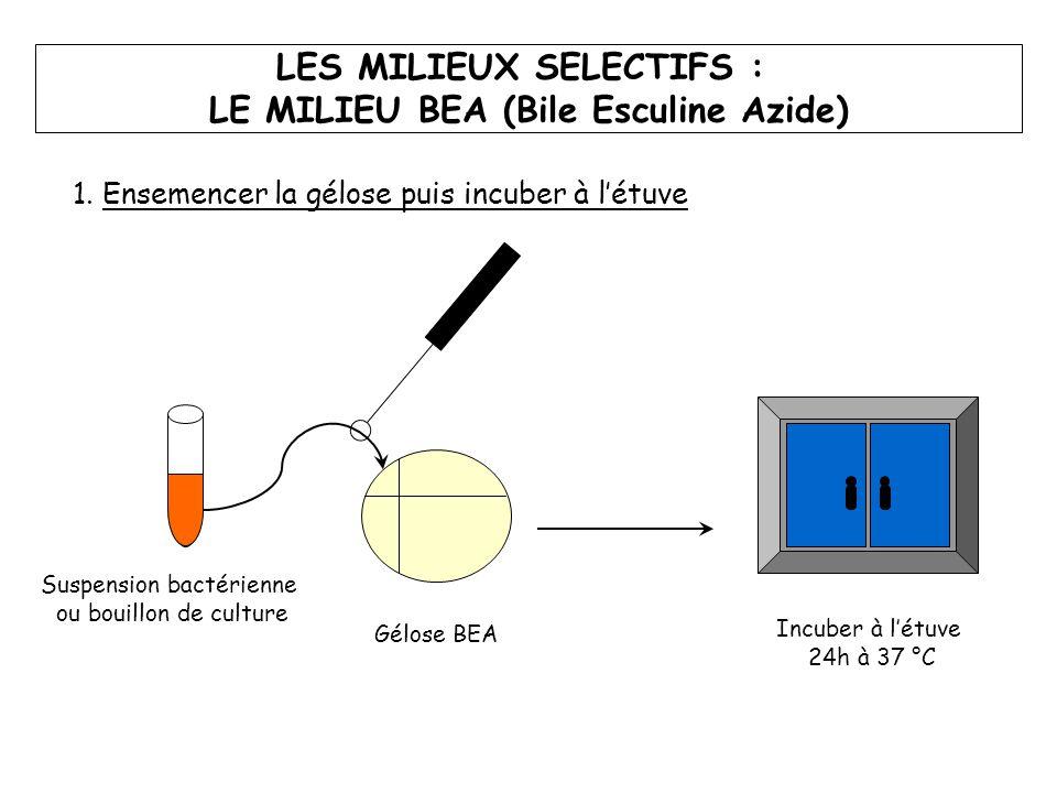 LES MILIEUX SELECTIFS : LE MILIEU BEA (Bile Esculine Azide)