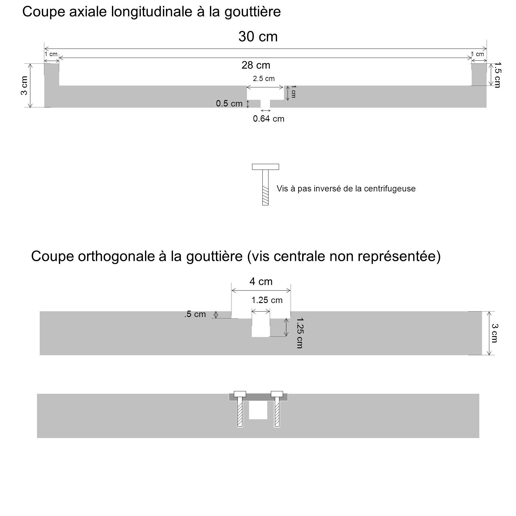 Coupe axiale longitudinale à la gouttière
