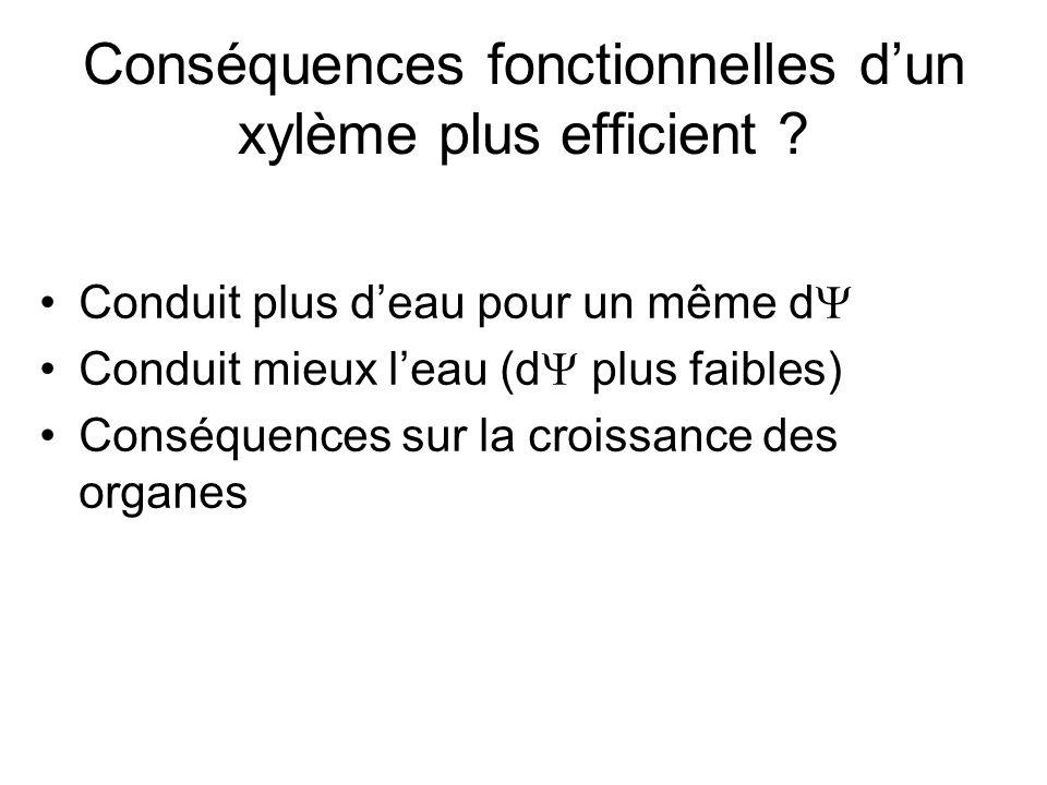 Conséquences fonctionnelles d'un xylème plus efficient