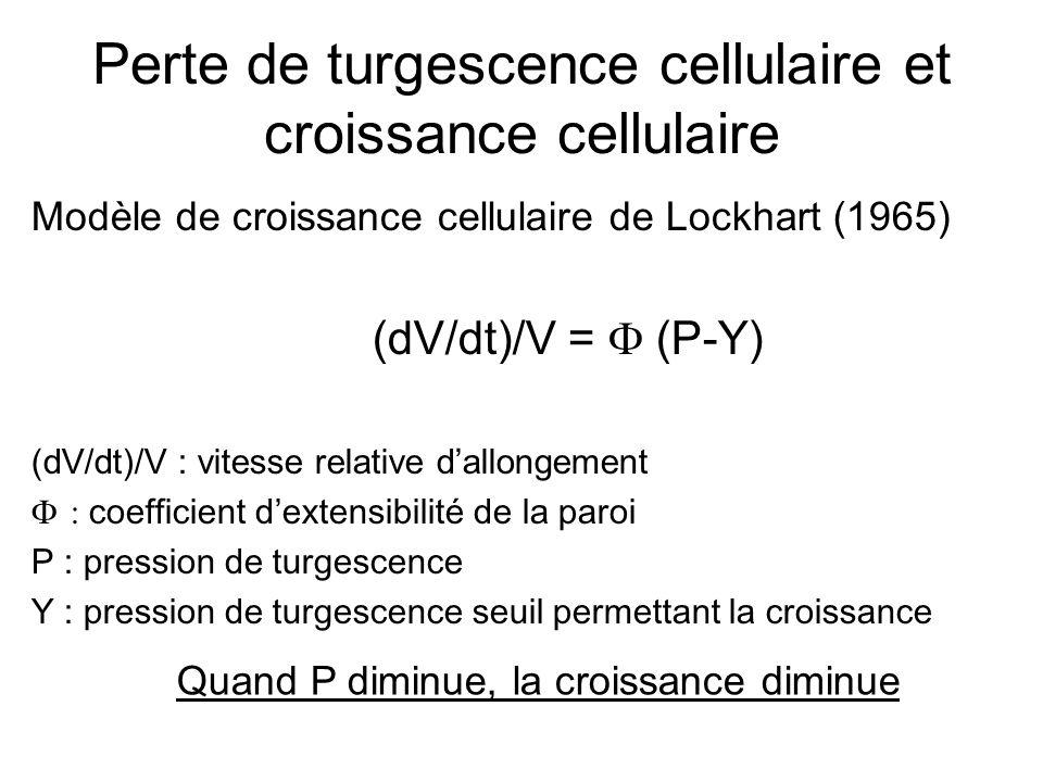 Perte de turgescence cellulaire et croissance cellulaire