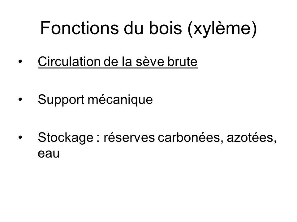Fonctions du bois (xylème)