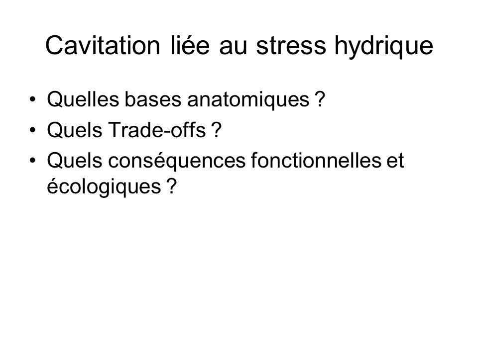 Cavitation liée au stress hydrique