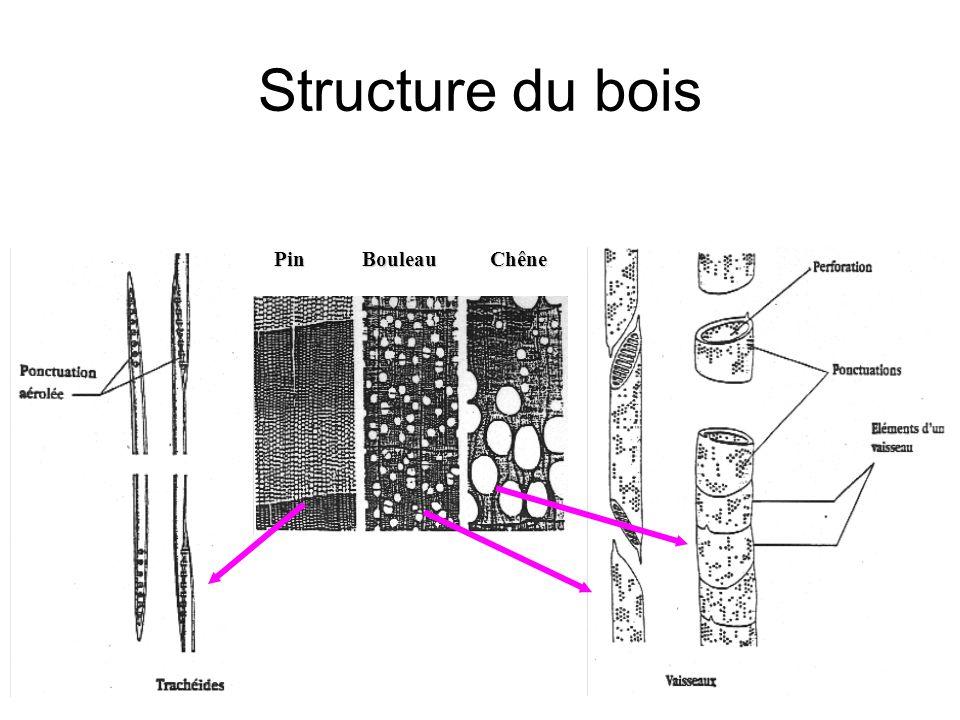 Structure du bois Pin Bouleau Chêne