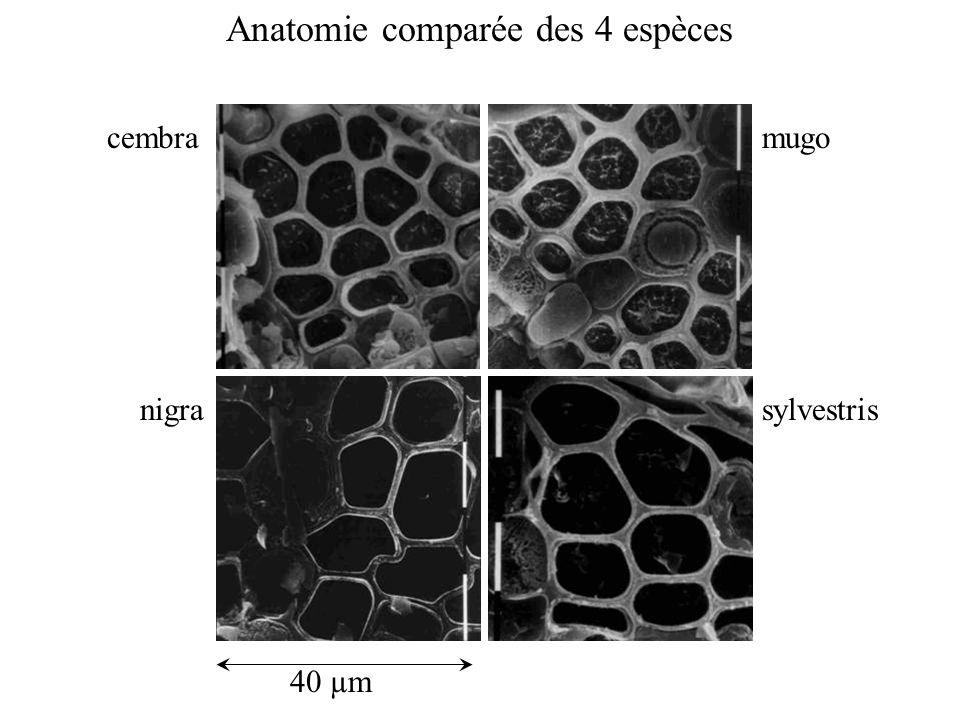 Anatomie comparée des 4 espèces