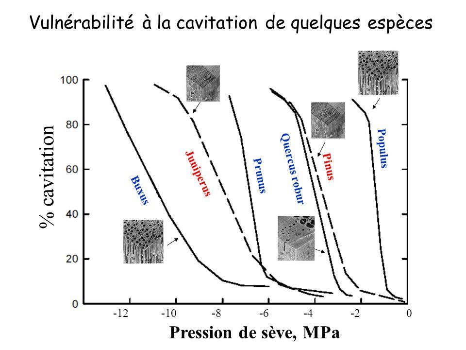 % cavitation Vulnérabilité à la cavitation de quelques espèces