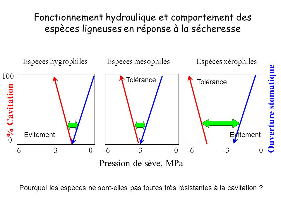 Fonctionnement hydraulique et comportement des espèces ligneuses en réponse à la sécheresse