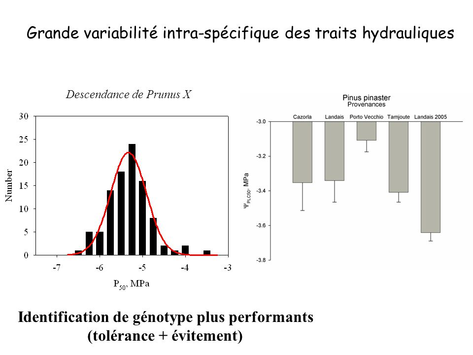 Identification de génotype plus performants (tolérance + évitement)