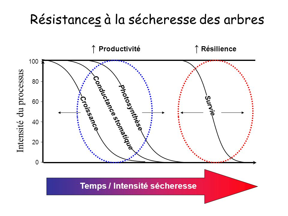 Conductance stomatique Temps / Intensité sécheresse