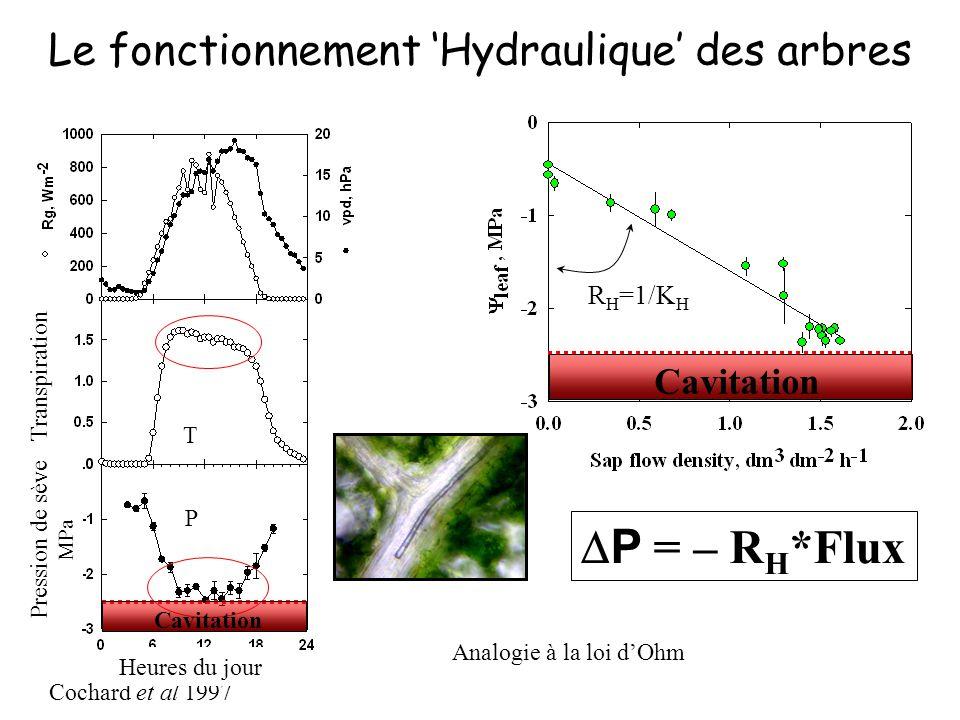 Le fonctionnement 'Hydraulique' des arbres