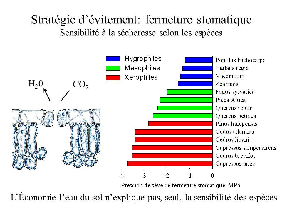 Stratégie d'évitement: fermeture stomatique Sensibilité à la sécheresse selon les espèces