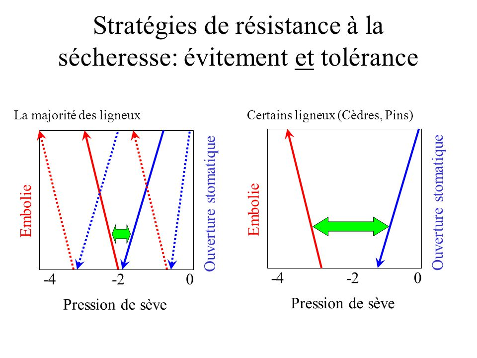 Stratégies de résistance à la sécheresse: évitement et tolérance