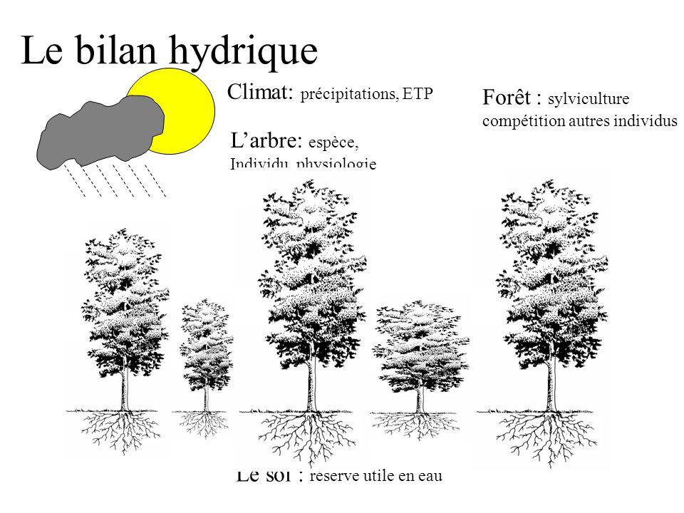 Le bilan hydrique Climat: précipitations, ETP Forêt : sylviculture