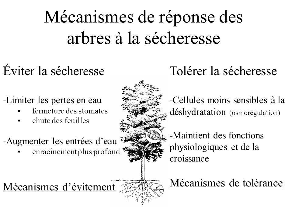 Mécanismes de réponse des arbres à la sécheresse