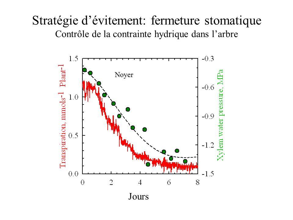 Stratégie d'évitement: fermeture stomatique Contrôle de la contrainte hydrique dans l'arbre