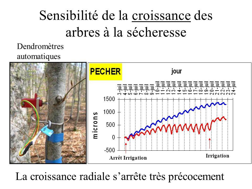 Sensibilité de la croissance des arbres à la sécheresse