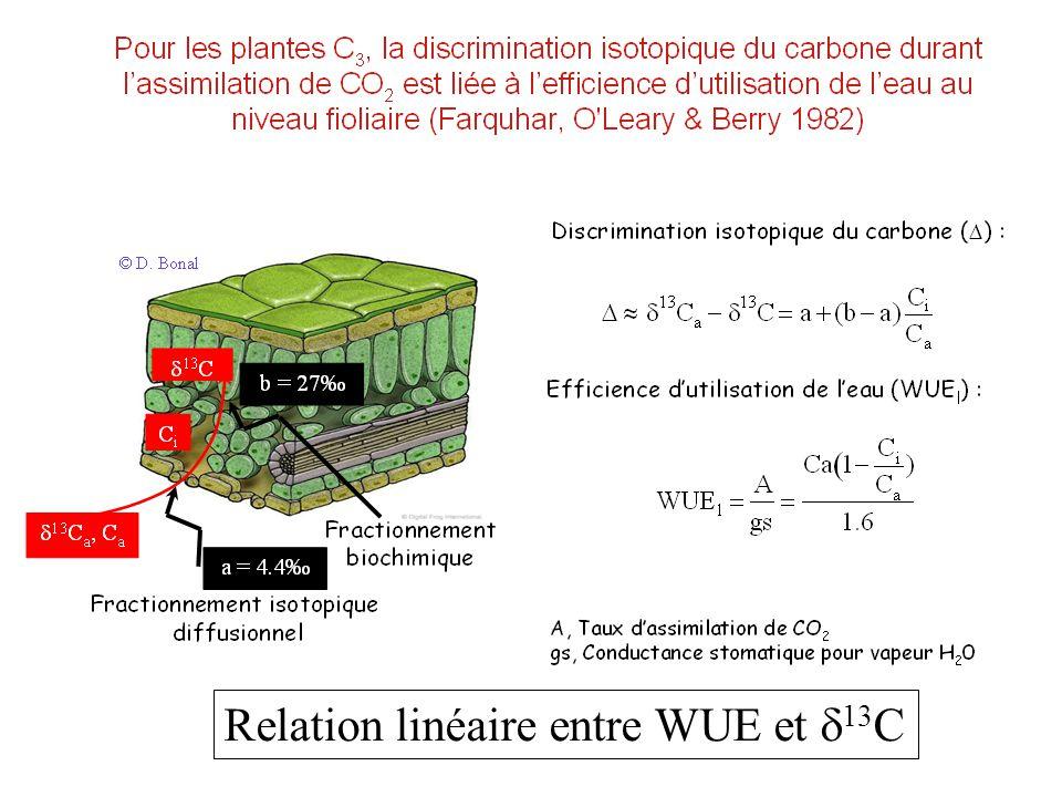 Relation linéaire entre WUE et d13C