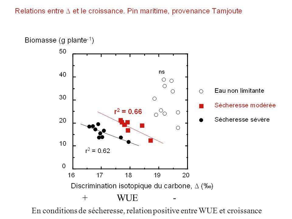 + WUE - En conditions de sécheresse, relation positive entre WUE et croissance.