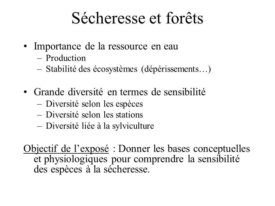Sécheresse et forêts Importance de la ressource en eau