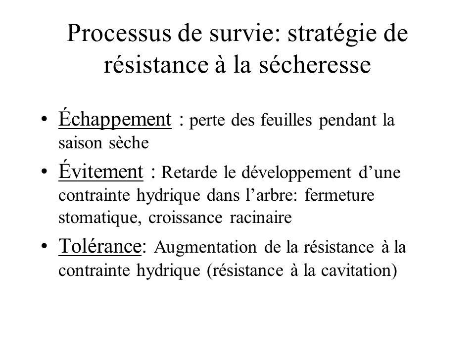 Processus de survie: stratégie de résistance à la sécheresse