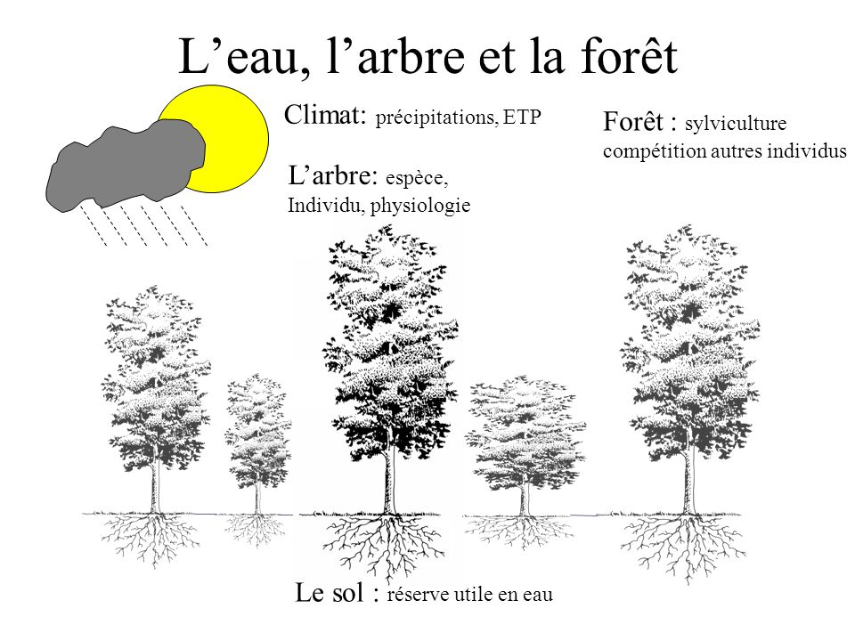 L'eau, l'arbre et la forêt
