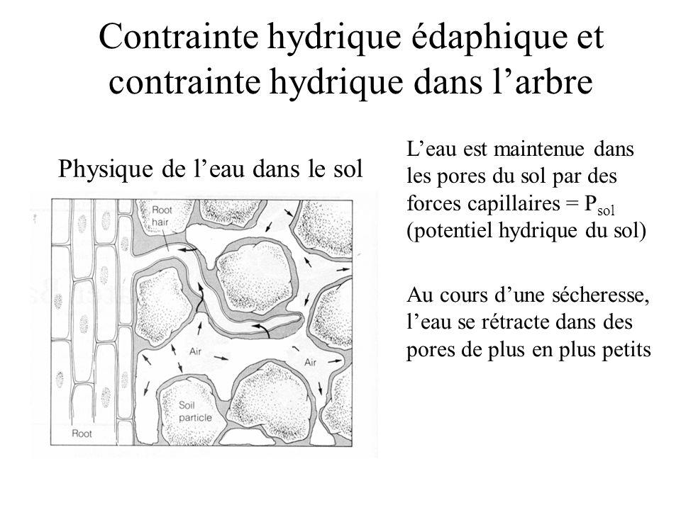 Contrainte hydrique édaphique et contrainte hydrique dans l'arbre