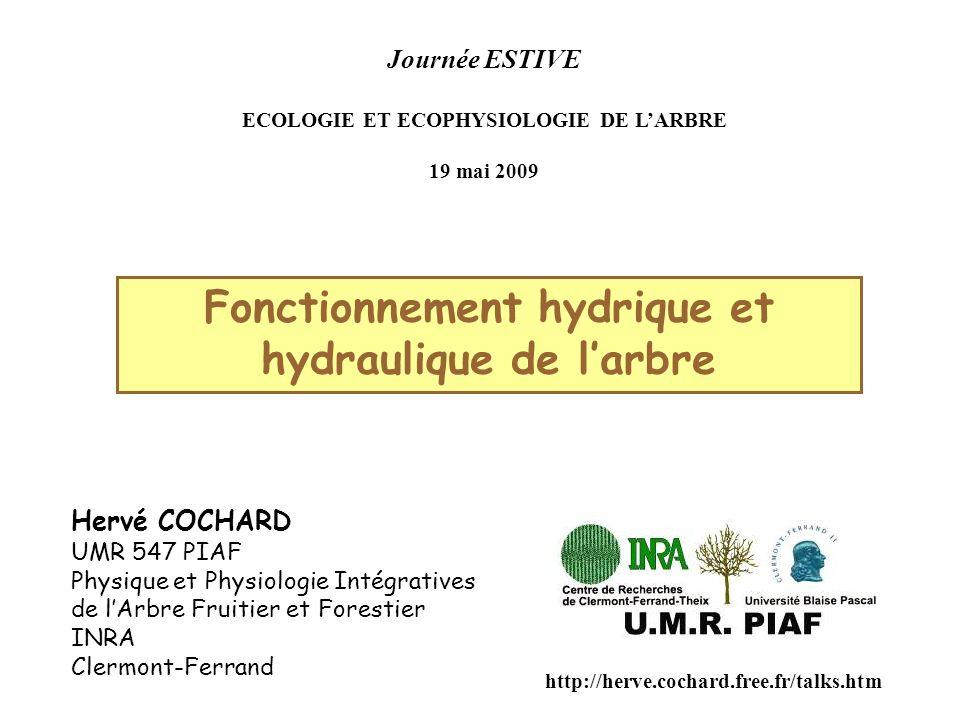 Fonctionnement hydrique et hydraulique de l'arbre